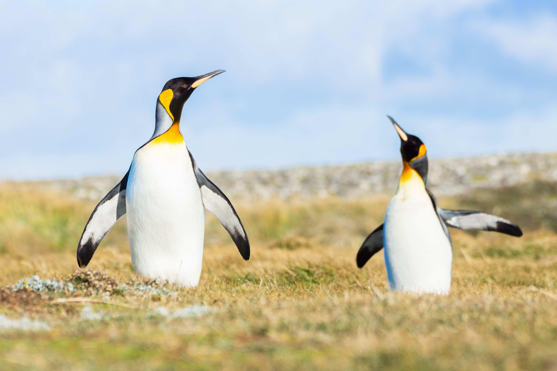 Fotografía de Naturaleza y Fauna por Ariel Alonzo