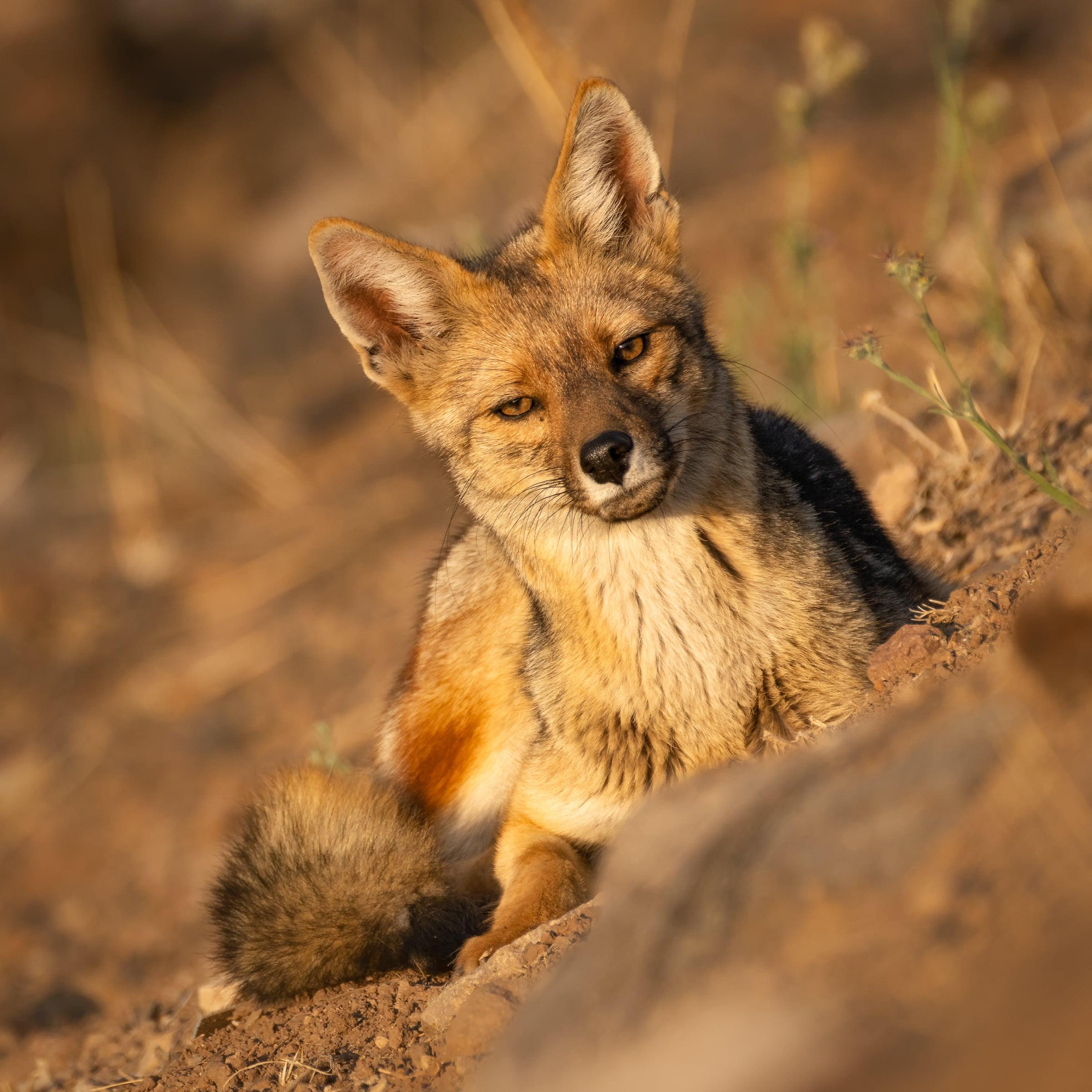 Fotografía de Fauna por Jean Paul de la Harpe