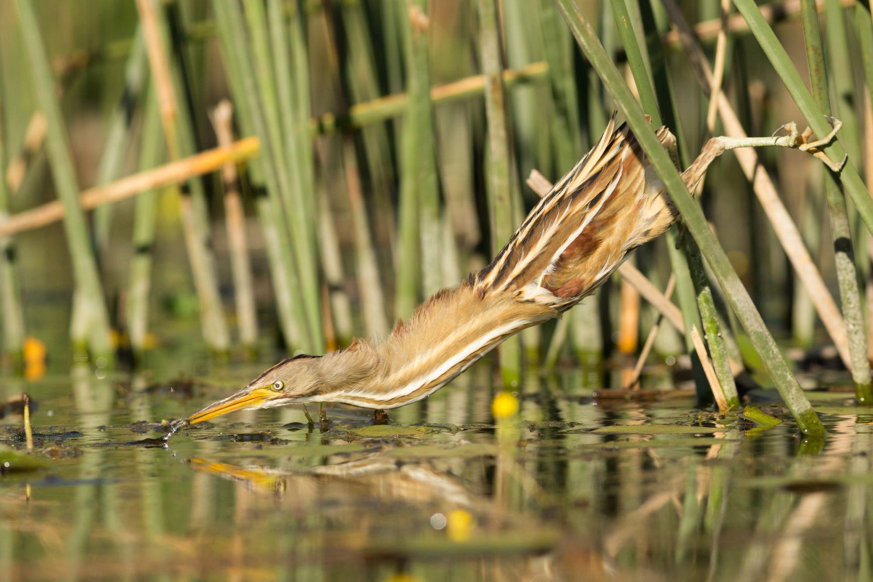 Fotografía de Aves Silvestres