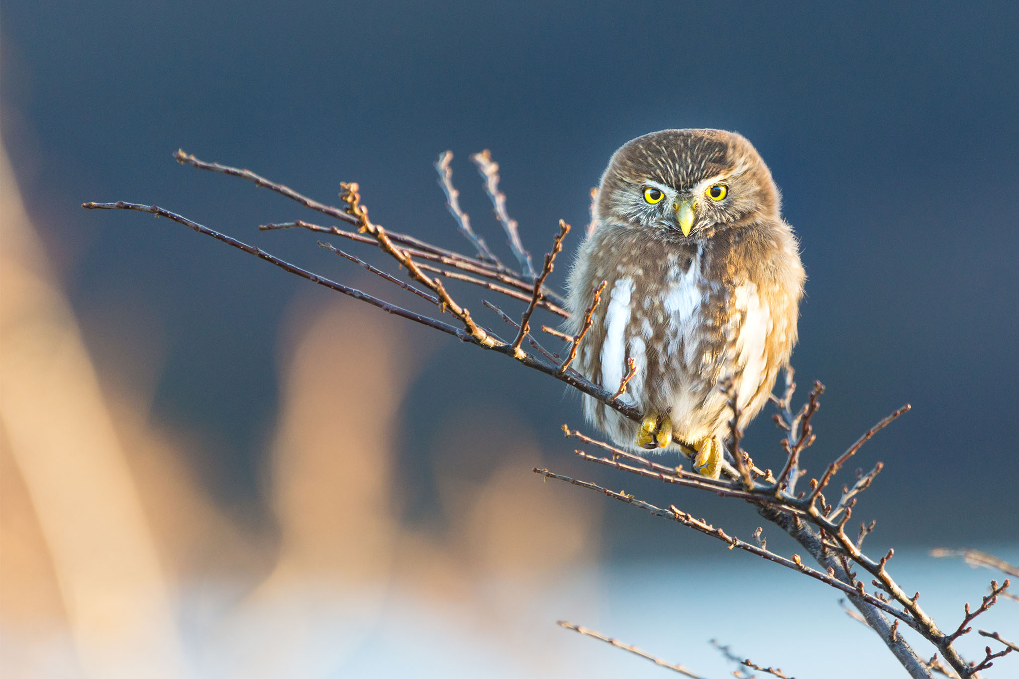 Fotografiando Aves y Mamíferos