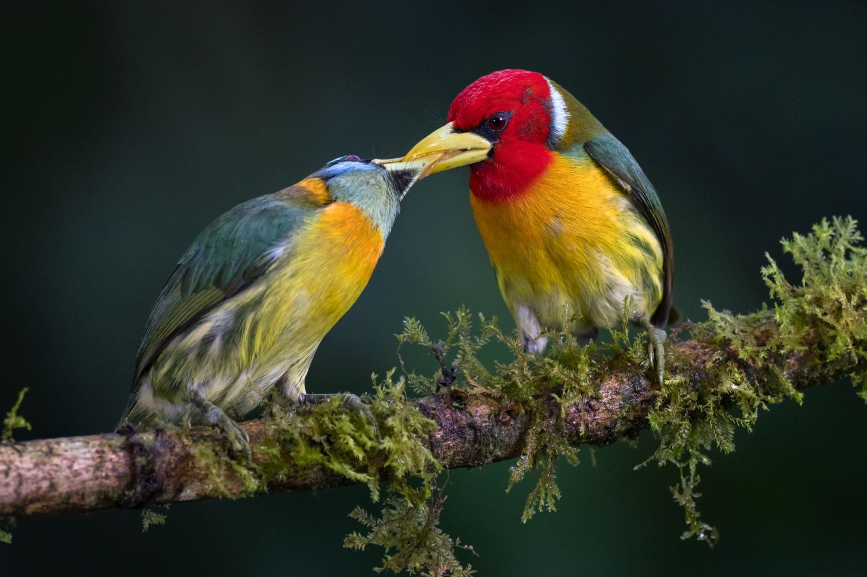 Memo Gómez: pasión por compartir la belleza de las aves y sensibilizar sobre su conservación