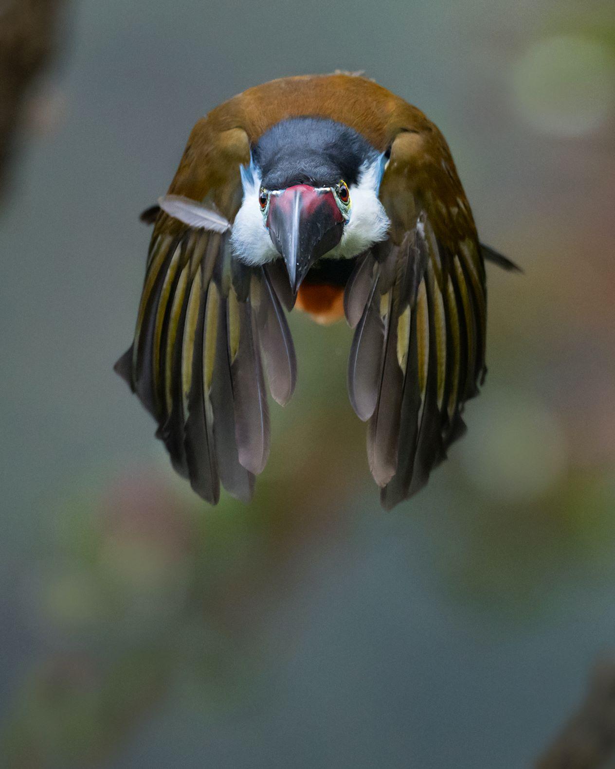 ¿Dónde Fotografiar Aves en Colombia? por Memo Gómez