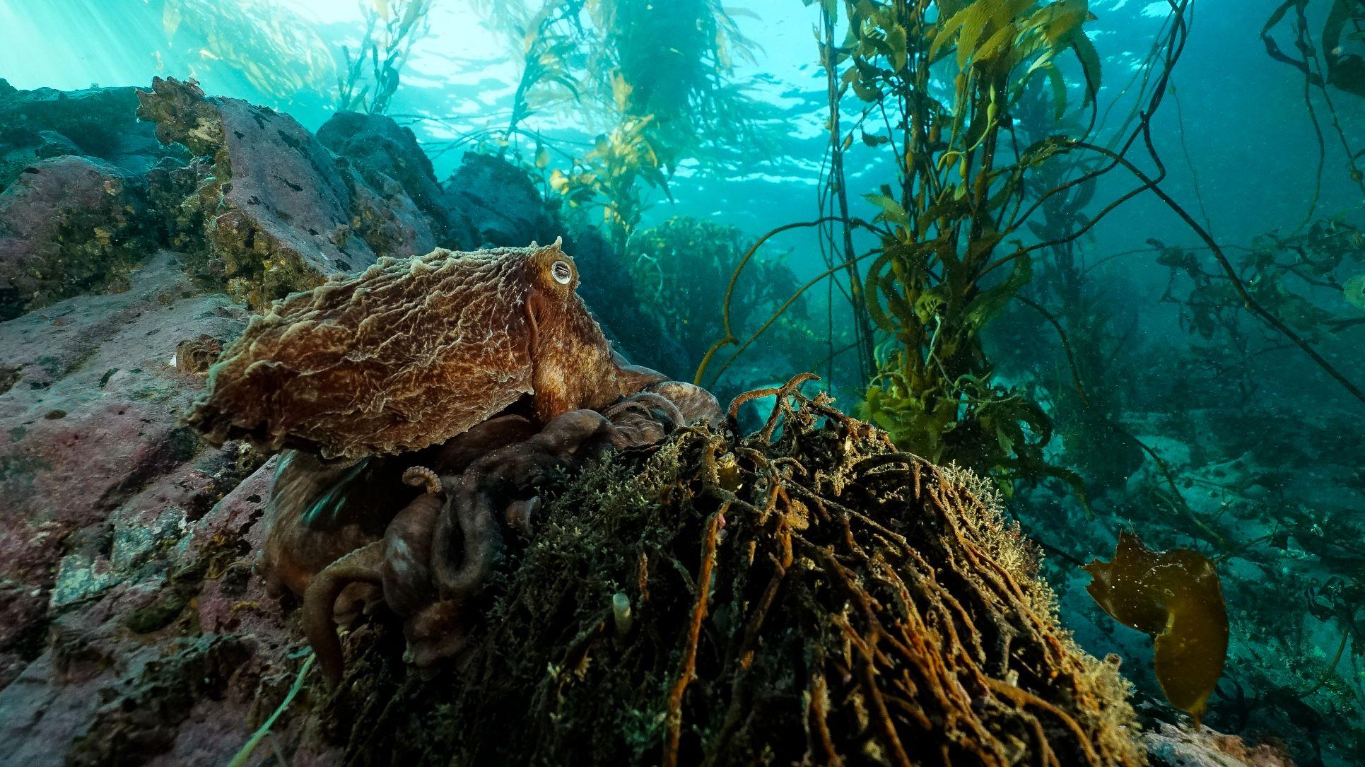 Otro mundo bajo el agua